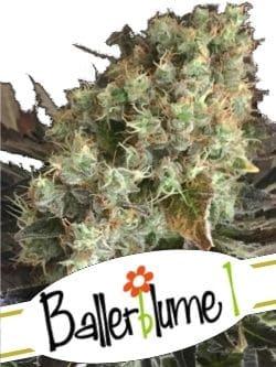Ballerblume 1