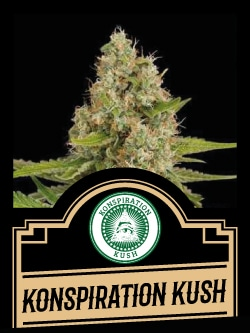 Konspiration Kush