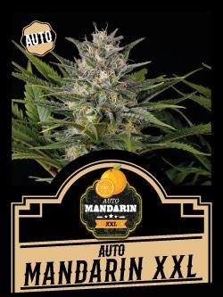 Auto Mandarin XXL