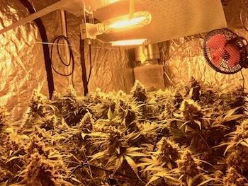 Anleitung Cannabis Anbau indoor