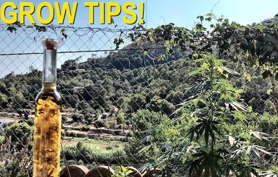 Guía para el cultivo de marihuana (interior)
