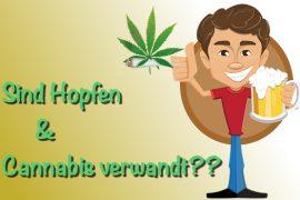 Sind Cannabis und Hopfen miteinander verwandt?