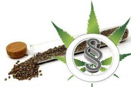 Cannabis Samen online kaufen oder bestellen – ist das legal?