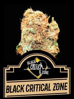 Black Critical Zone
